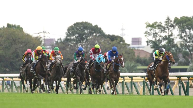 競馬 レース